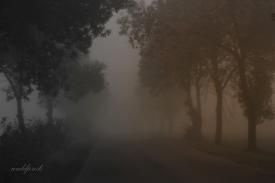 dalej we mgle