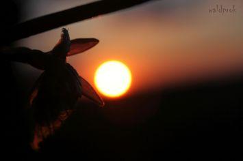 sunsetmay002