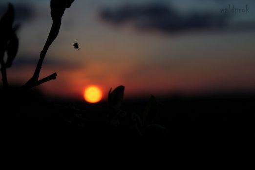 sunsetmay004